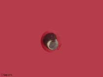 Image of Euchelus atratus (blackish margarite)