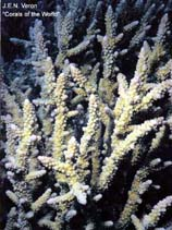 Image of Acropora vaughani